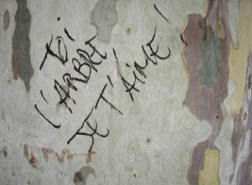 medium_arbre-amour.jpg