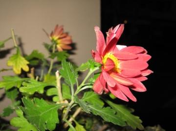 medium_last-flowers.jpg