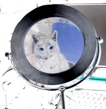 medium_mirror-cat-2.jpg