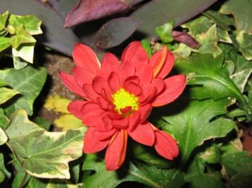 medium_new-flower.jpg