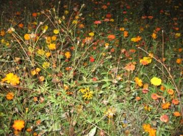 medium_prairie-fleurie.jpg