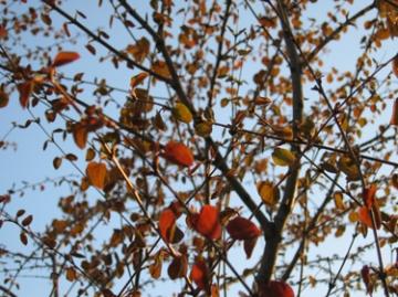 medium_red-tree.jpg