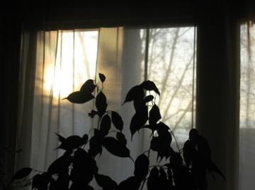 medium_winter-days.jpg