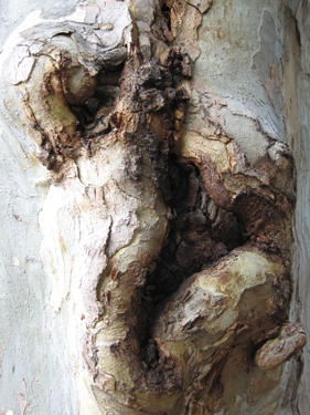 medium_wounded-tree-1.jpg