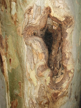 medium_wounded-tree-2.jpg