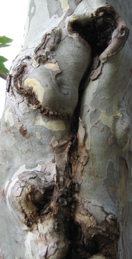 medium_wounded-tree-3.jpg