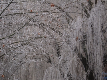 frozen-trees-1.jpg