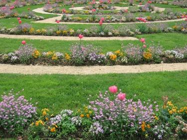plantes-metz-avril-3.jpg