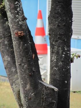 cone-de-chantier-20.jpg