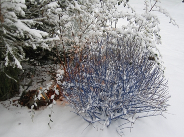Snow-Metz-22.jpg