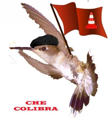 CHE-COLIBRA.jpg