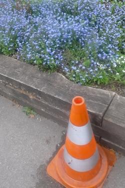 cône de chantier,cône de lübeck,myosotis,bleu,fleur bleue