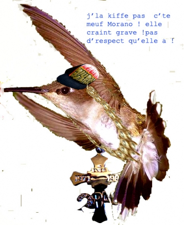 kolibri-pas-kiffer1.jpg