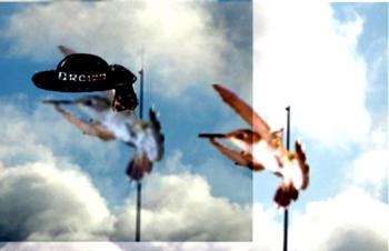 KL-colibreiziou.jpg