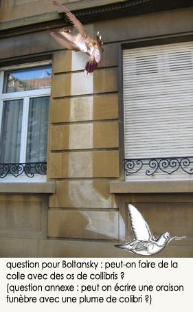 colle-colibri.jpg