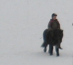 snow-horses-2.jpg