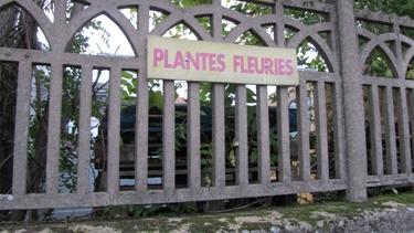 plantes,noms de plantes