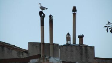 mouette,oiseau,ville