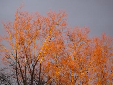 sunlight,trees