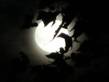 Moon-21_10_10.jpg