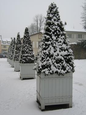 Snow-Metz-24.jpg