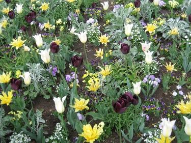 plantes-metz-avril-2.jpg