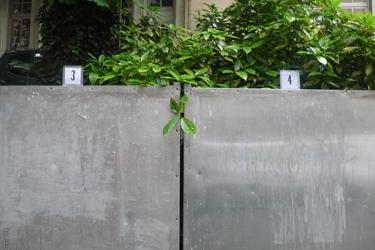 végétal,plante,élections,affichage