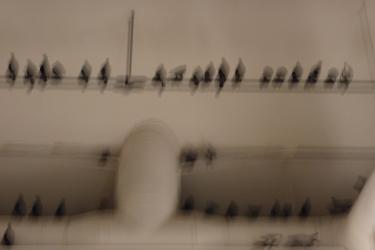 art,art contemporain,venise,biennale de venise,exposition,maurizio cattelan