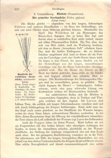moustique,zoologie,livre ancien