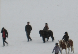 snow-horses-1.jpg