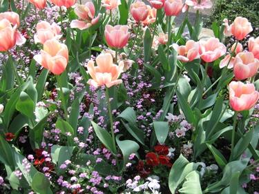 jardin-botanique-avril-17.jpg