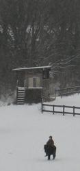 snow-horses-4.jpg