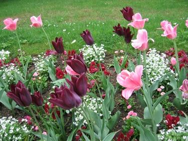 jardin-botanique-avril-2.jpg