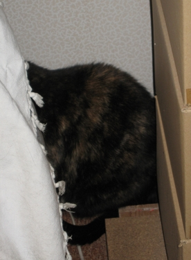 hidden-cat.jpg