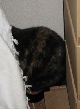 hidden-cat.jpg