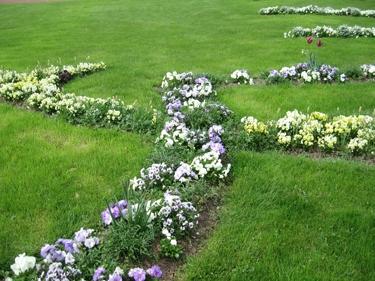 plantes-metz-avril-1.jpg
