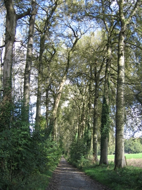 belgian-tree-road.jpg