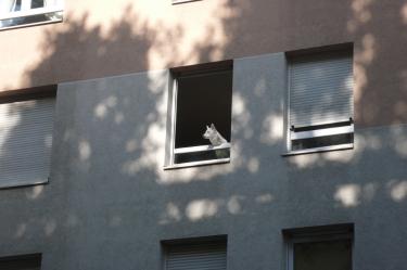 chien,fenêtre,blanc,loup