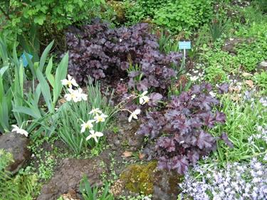 jardin-botanique-avril-14.jpg