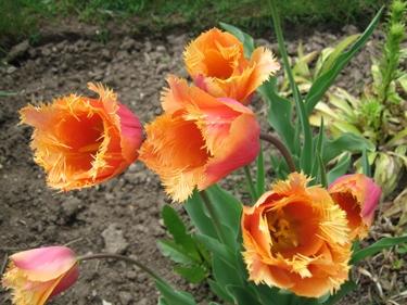 jardin-botanique-avril-11.jpg