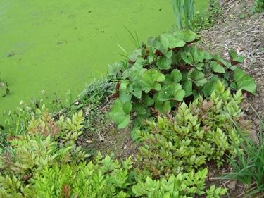 jardin-botanique-avril-9.jpg