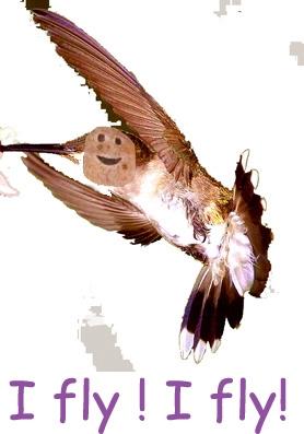 colibri8-gateau.jpg