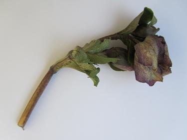hiver,hiver 2012,végétation