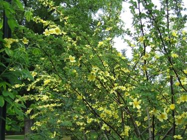 jardin-botanique-avril-12.jpg