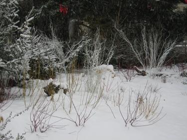 Snow-Metz-21.jpg