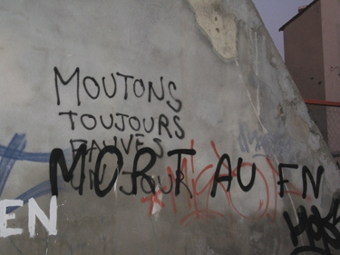 moutons-toujours.jpg