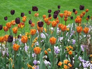 jardin-botanique-avril-16.jpg