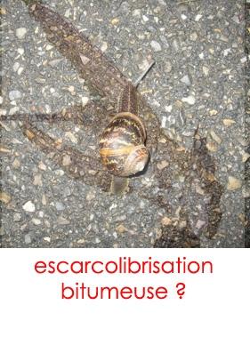 escarcolibrisation.jpg