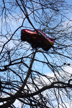 arbre,insolite