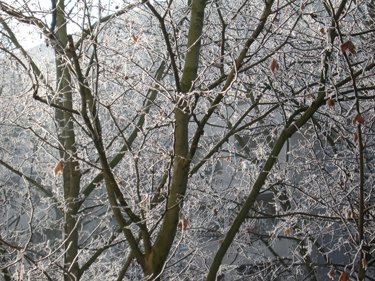 frozen-trees-2.jpg